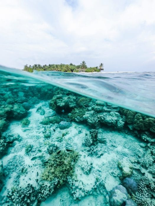 Palau Bans Reef-Toxic Sunscreen Chemicals to Save Corals
