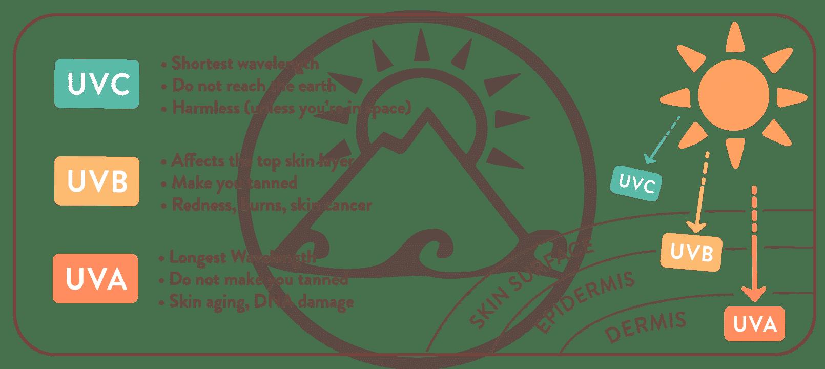 Suntribe ® | SPF, UVA & UVB