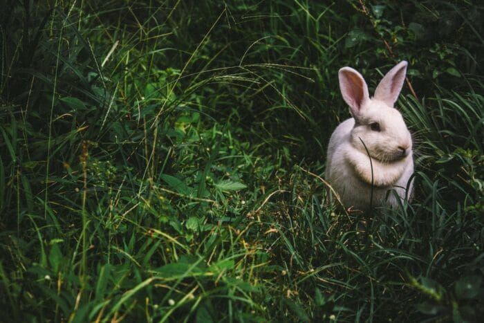 What does cruelty-free mean?